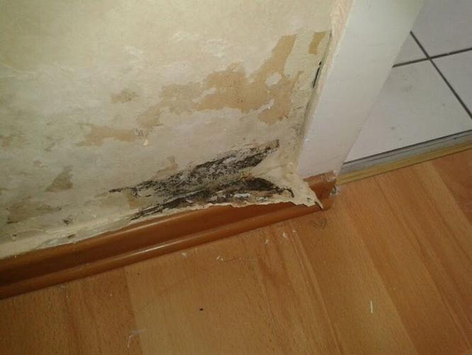 грибок после залива квартиры