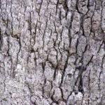 Новинка – кора дерева для изоляционной пены