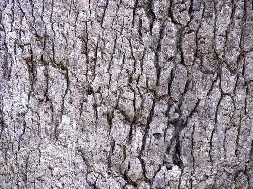 Новинка - кора дерева для изоляционной пены