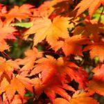 Осенний ландшафтный дизайн