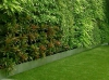 Вертикальные сады