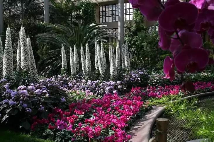 Как подобрать растения-долгожители для сада